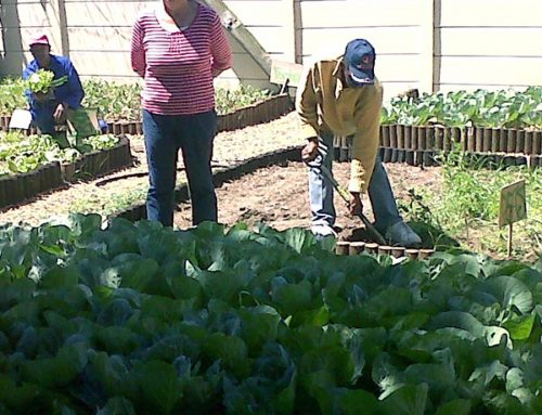 From weed-infested plot to food garden